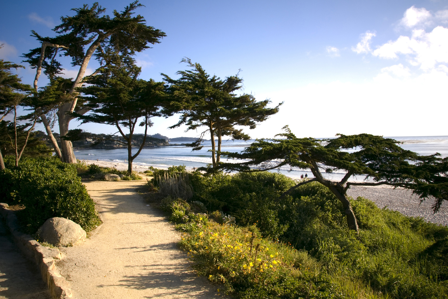 Carmel_Beach_Cypress_Trees